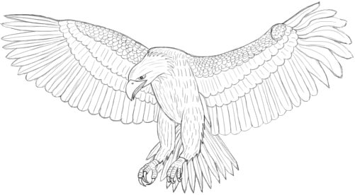 how-to-draw-an-eagle-0000